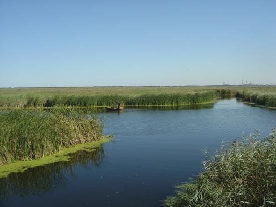 Photos of Longfeng Marsh